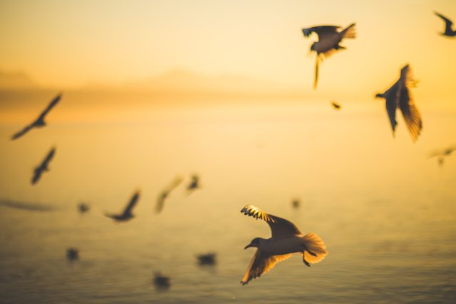 beach-birds-blurred-129844